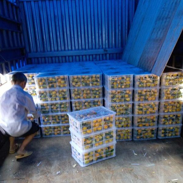 新余蜜桔选果包装厂