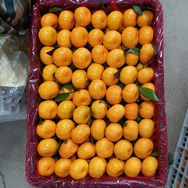 优选蜜桔选果包装厂