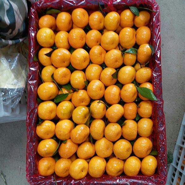 德康蜜桔选果包装厂
